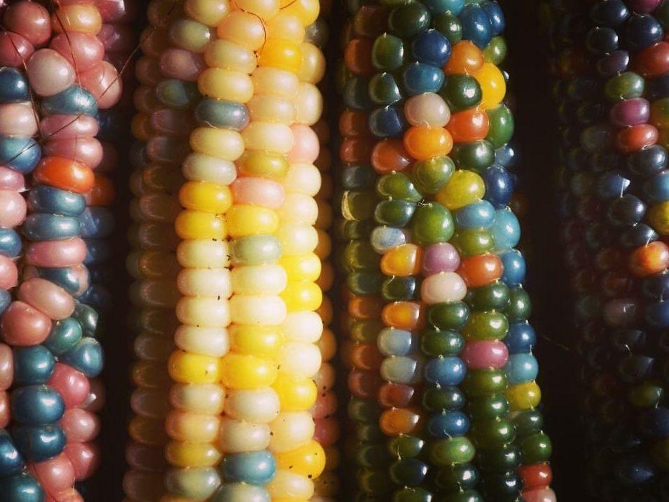 Seed Freaks