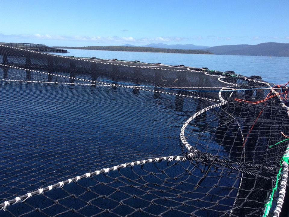 Nets Tasmania
